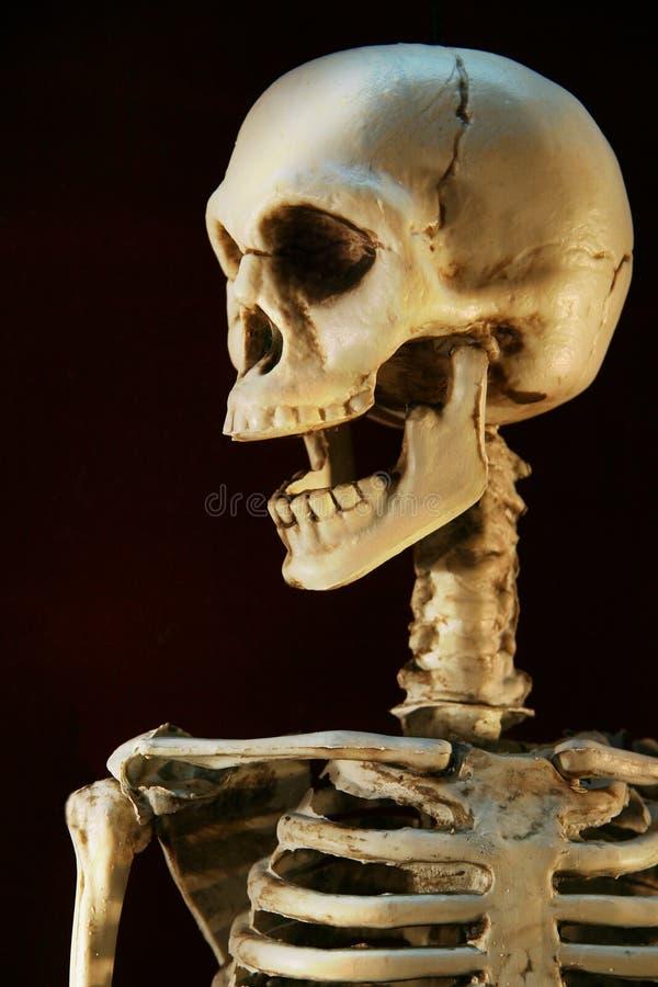 Esqueleto de Víspera de Todos los Santos imagenes de archivo