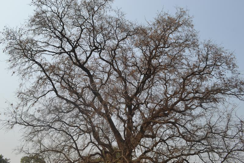 Esqueleto del árbol imagen de archivo libre de regalías