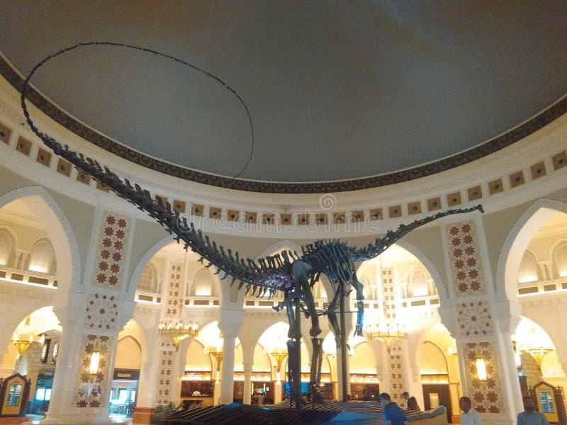 Esqueleto del dinosaurio foto de archivo libre de regalías