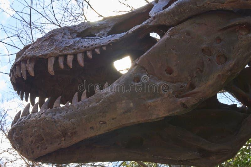 Esqueleto del dinosaurio en la exhibición fotografía de archivo