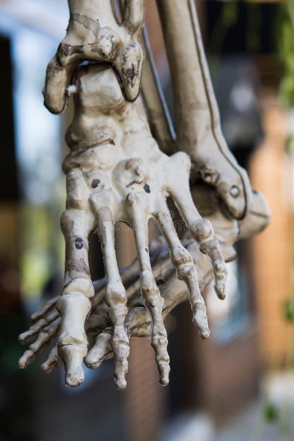 Esqueleto del pie foto de archivo. Imagen de diversión - 27186702