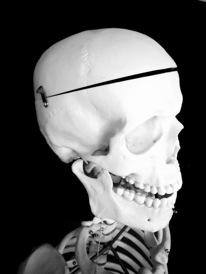 Esqueleto del sitio de clase imagenes de archivo