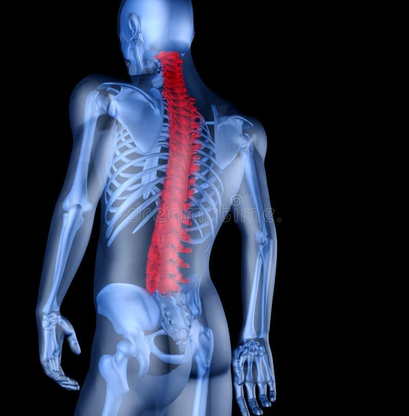 Esqueleto do homem com a dor lombar ilustração do vetor