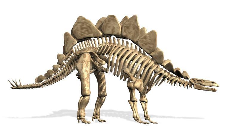 Esqueleto do Stegosaurus ilustração do vetor