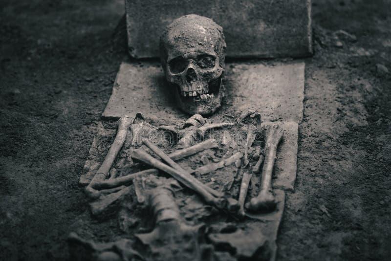 Esqueleto en la arena fotografía de archivo