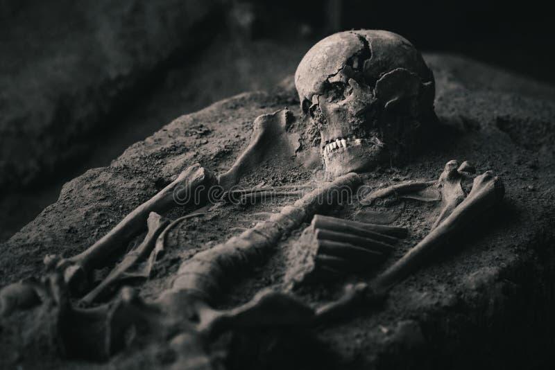 Esqueleto en la arena foto de archivo