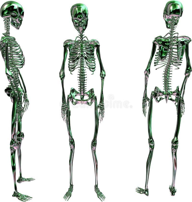 Esqueleto fêmea metálico verde ilustração stock