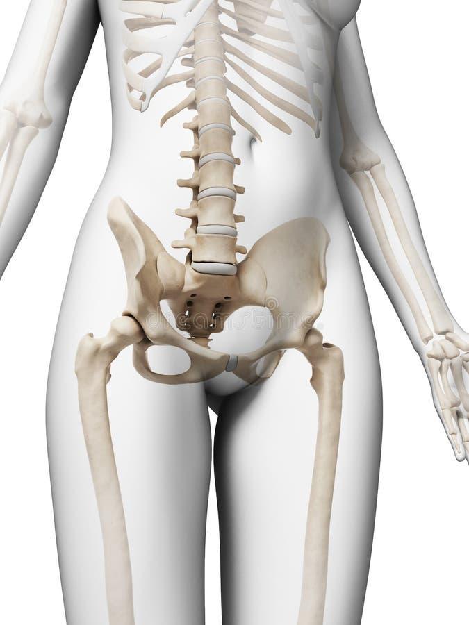 Esqueleto femenino stock de ilustración. Ilustración de esqueleto ...