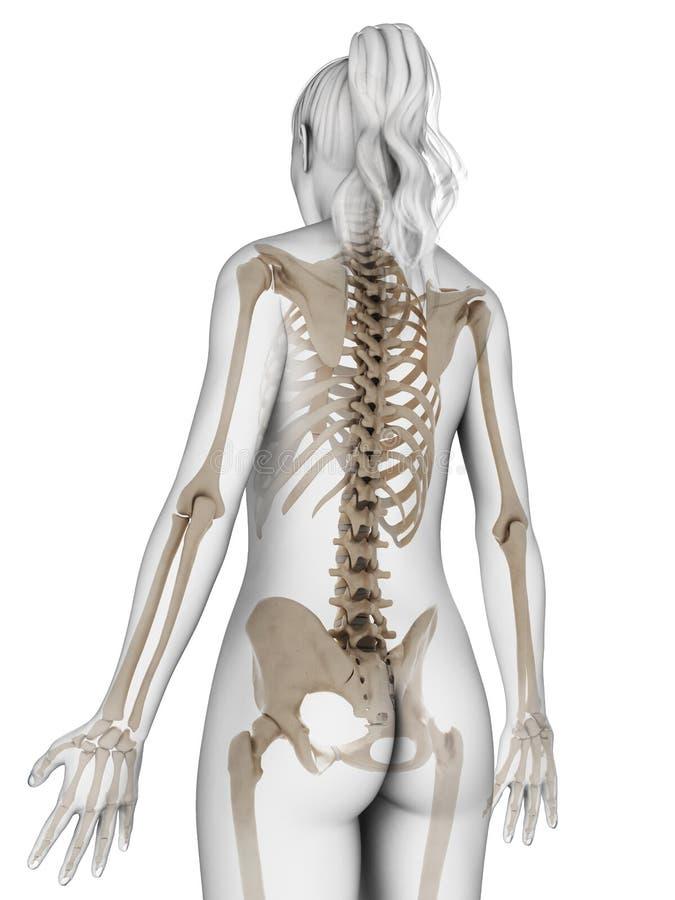 Esqueleto femenino stock de ilustración. Ilustración de humano ...