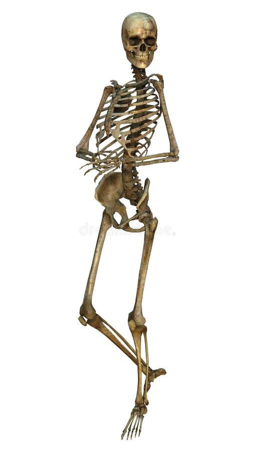 Download Esqueleto humano stock de ilustración. Ilustración de halloween - 41904020
