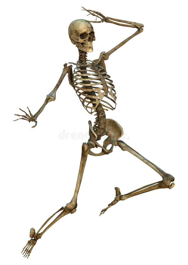 Download Esqueleto humano stock de ilustración. Ilustración de gráfico - 41904336
