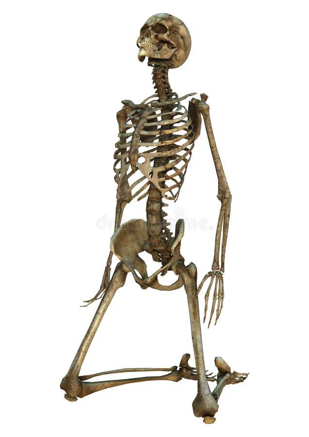 Download Esqueleto humano stock de ilustración. Ilustración de gente - 41904382