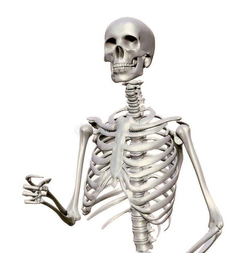 Download Esqueleto humano stock de ilustración. Ilustración de ilustración - 42432723