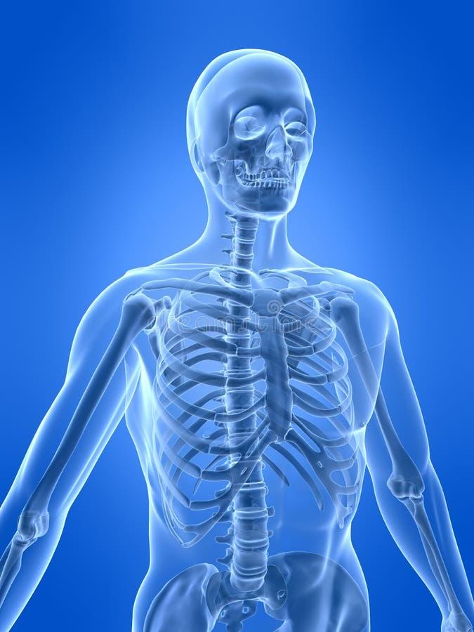 Esqueleto humano ilustración del vector
