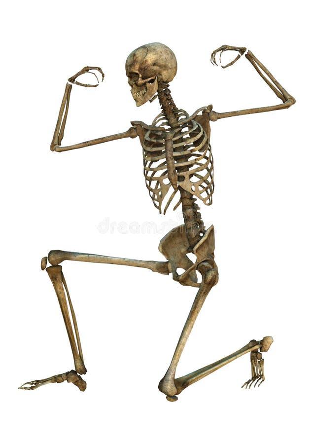 Esqueleto humano stock de ilustración. Ilustración de salud - 45608103