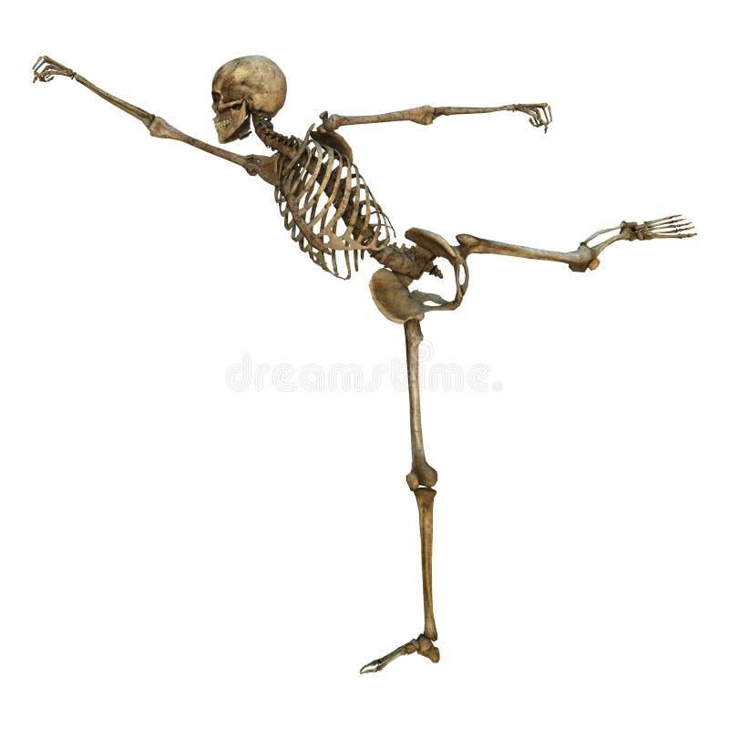 Esqueleto humano ilustração royalty free