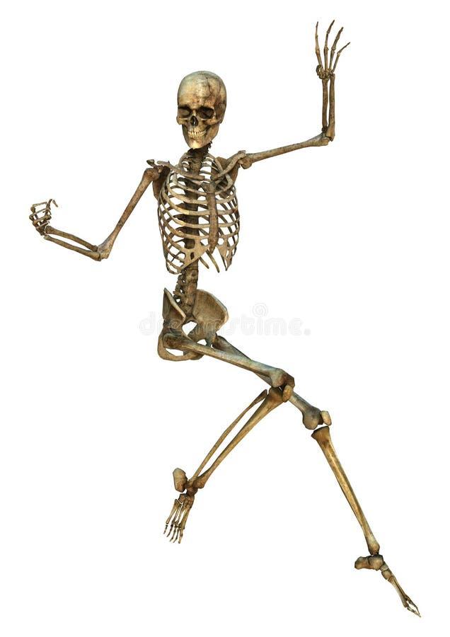 Esqueleto humano foto de archivo