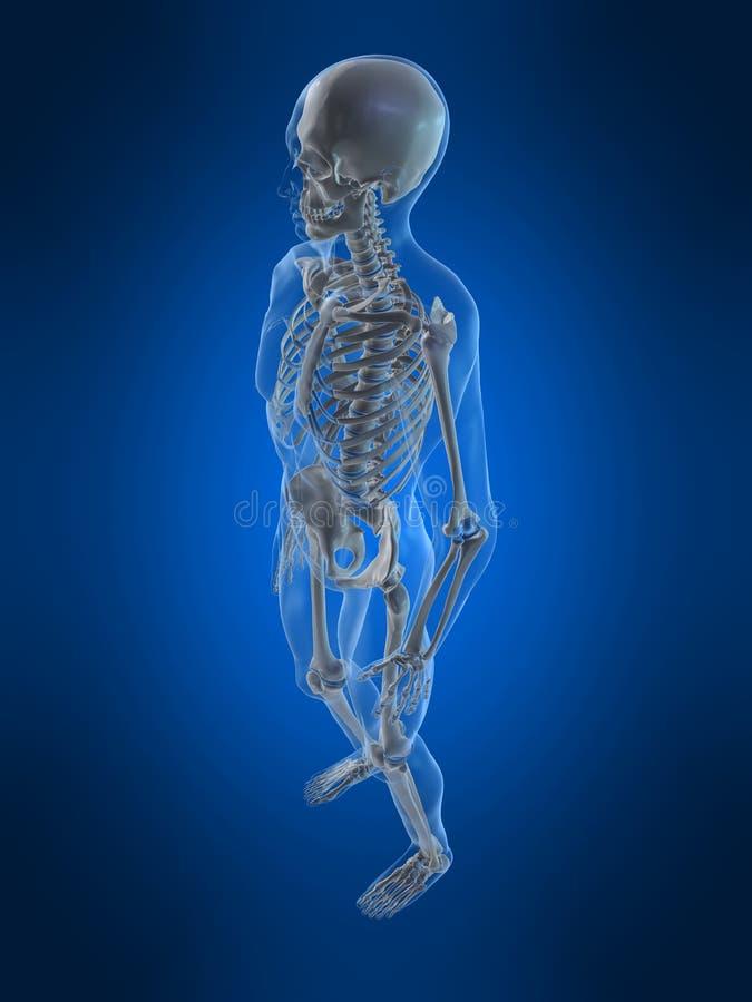 Esqueleto humano stock de ilustración. Ilustración de backbone - 7750143