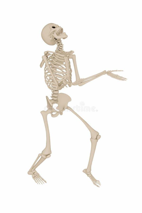Esqueleto humano stock de ilustración. Ilustración de back - 89590993