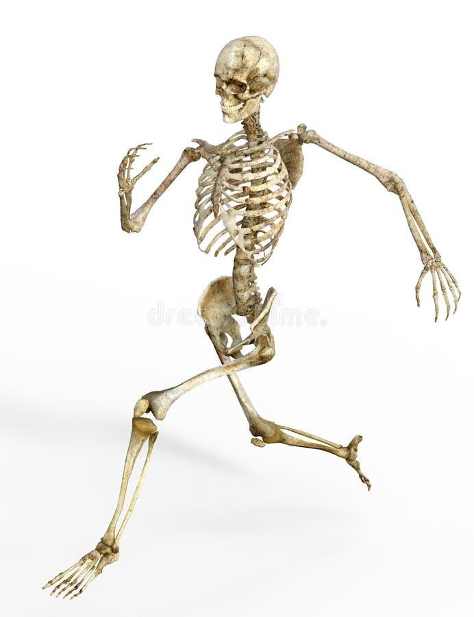 Esqueleto humano corriente ilustración del vector
