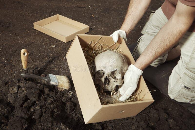 Esqueleto humano - cráneo - encontrado y lleno por el arqueólogo en la ubicación foto de archivo libre de regalías