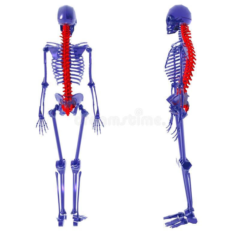 Esqueleto humano sobre a parte traseira branca do mau ilustração do vetor