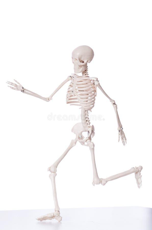 Esqueleto isolado foto de stock