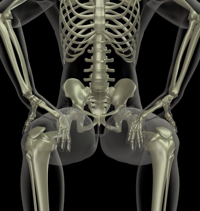 Esqueleto médico masculino ilustração stock