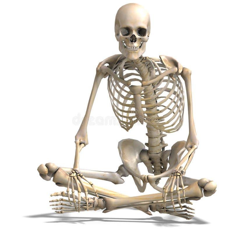 Esqueleto masculino correto anatômico ilustração do vetor