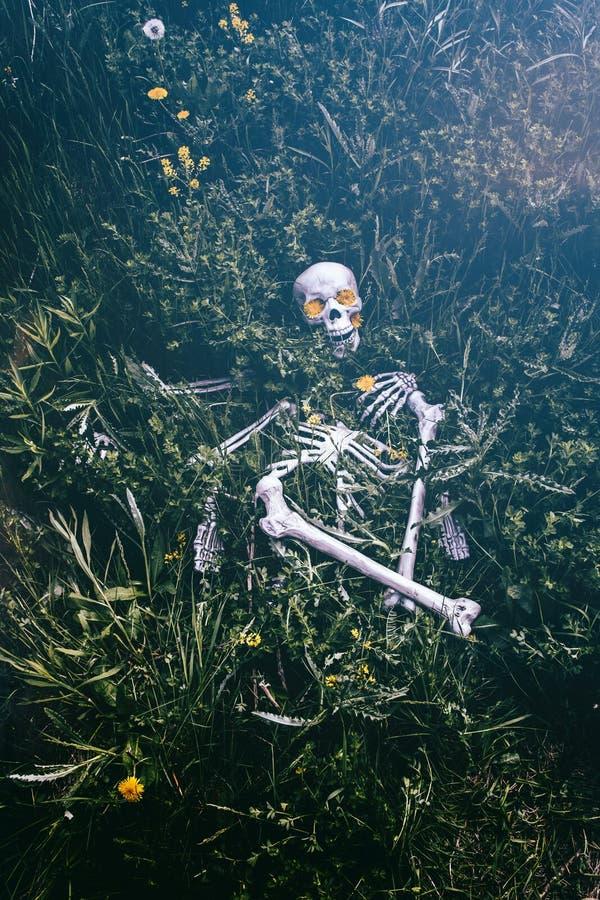 Esqueleto na grama 3 imagem de stock
