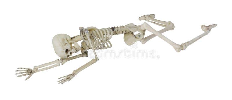 Esqueleto que coloca parcialmente propenso e lateralmente fotos de stock royalty free