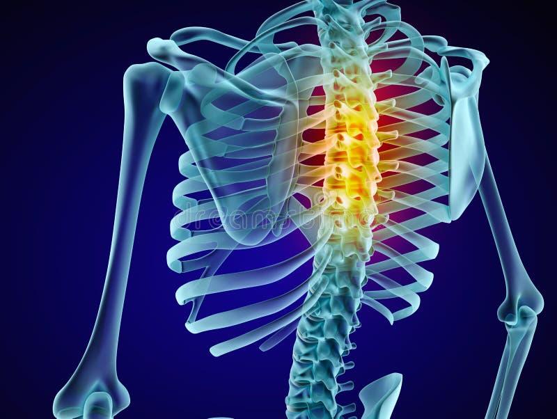 Esqueleto y espina dorsal humanos Opinión de la radiografía stock de ilustración