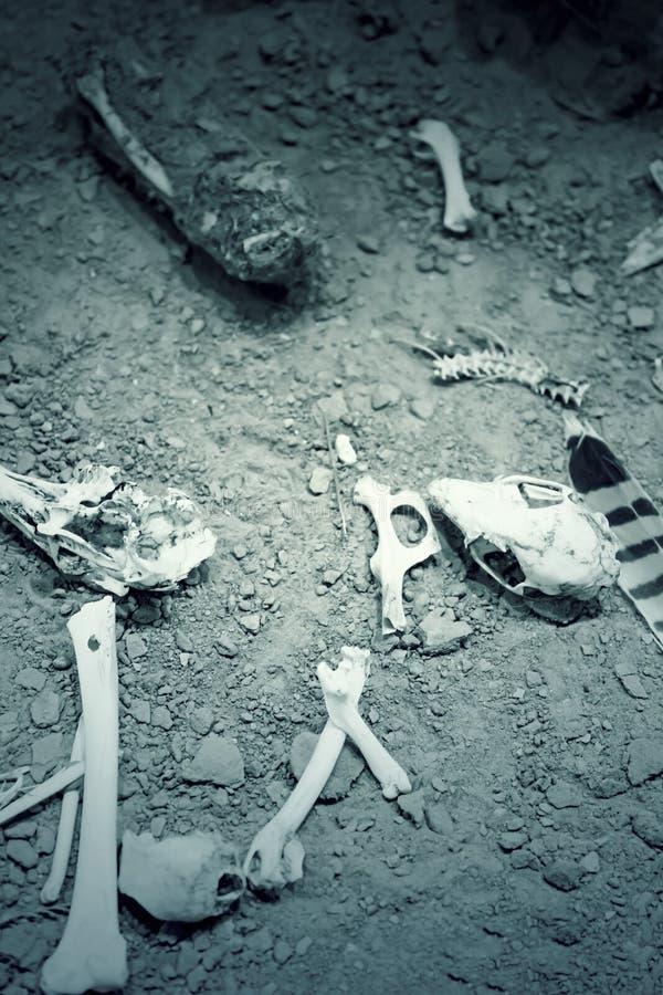 Esqueletos animais imagens de stock