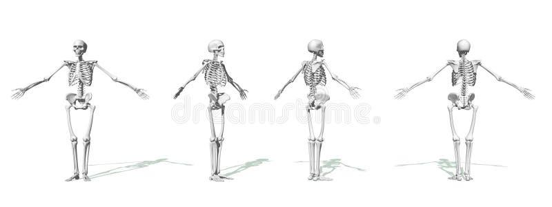 Esqueletos brancos ilustração do vetor