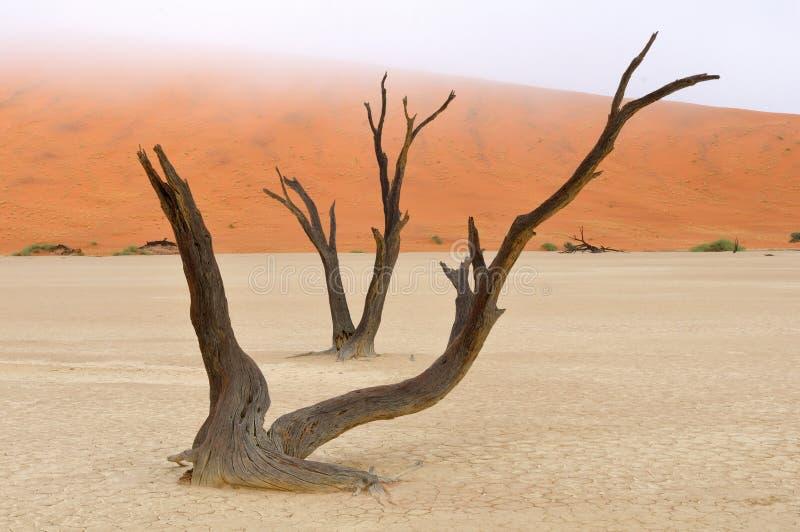 Esqueletos del árbol, Deadvlei, Namibia fotos de archivo