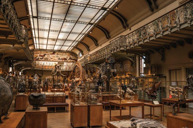 Esqueletos e fósseis pré-históricos na galeria da paleontologia e da anatomia comparativa em Paris imagens de stock royalty free