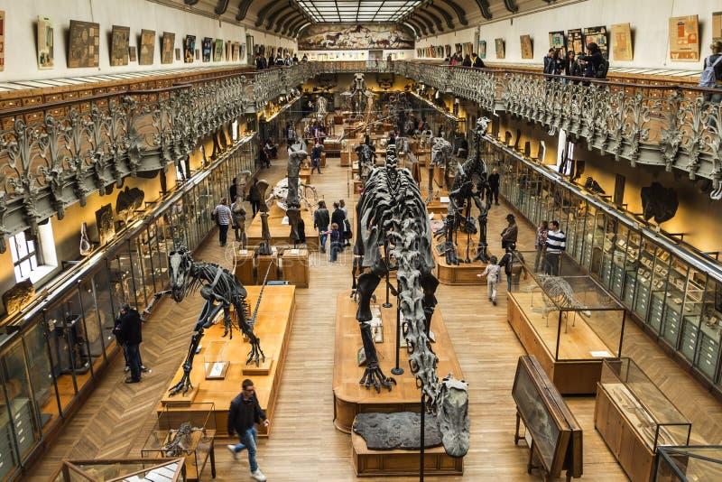 Esqueletos en galería del paleonthology en el museo de la historia natural de París, Francia foto de archivo libre de regalías