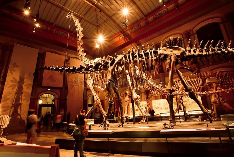 Esqueletos históricos del Brachiosaurus y del Diplodocus en el dinosaurio Pasillo foto de archivo