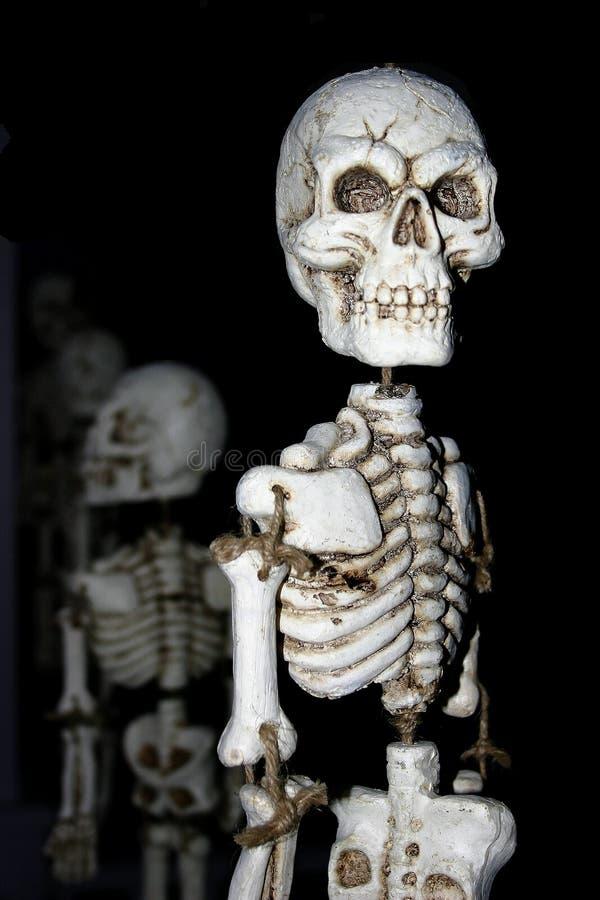 Esqueletos todos en una fila imagenes de archivo