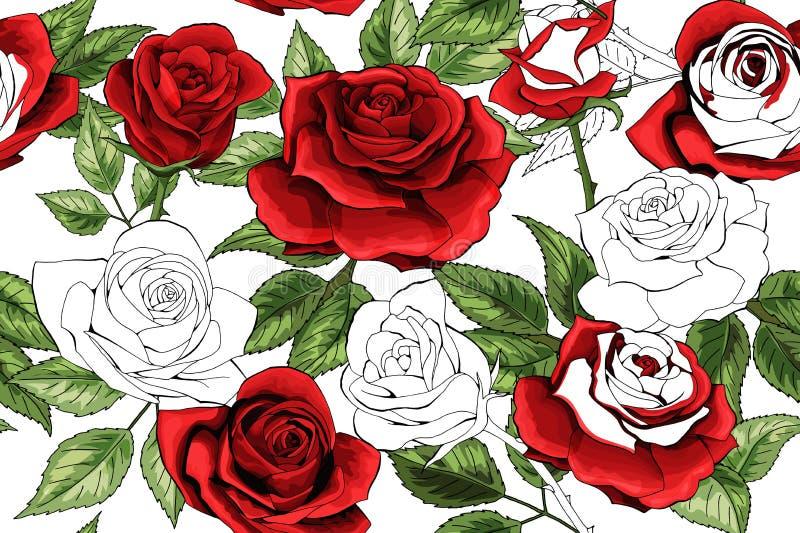 Esquema blanco hermoso y fondo inconsútil colered del modelo de las rosas rojas ilustración del vector