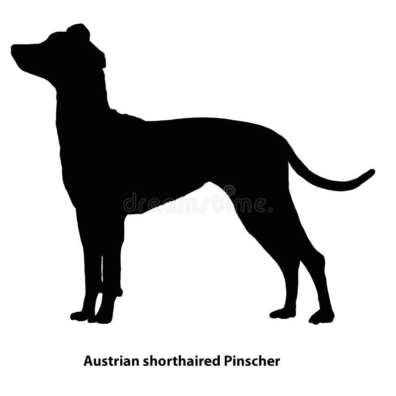 Esquema blanco y negro del Pinscher de pelo corto austríaco stock de ilustración
