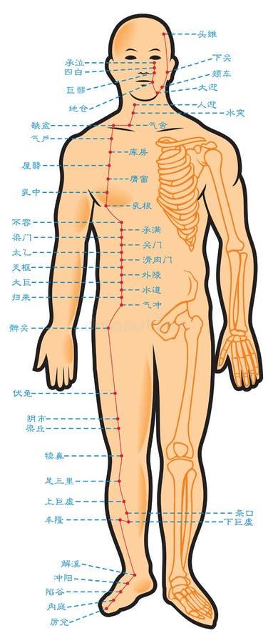 Esquema chino de la acupuntura ilustración del vector