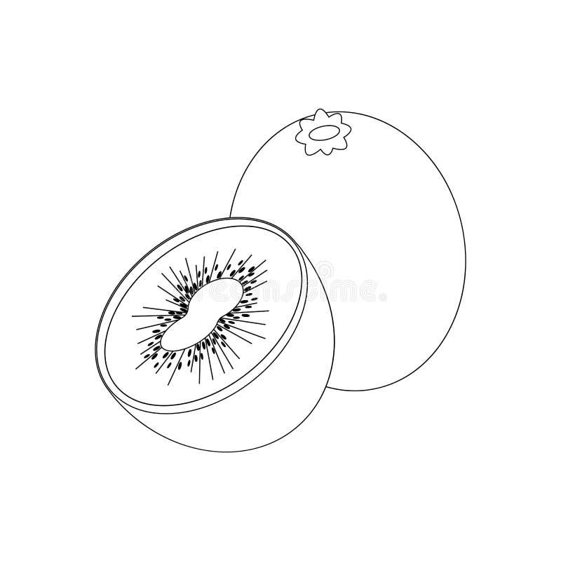 Esquema de Kiwi Fruit ilustración del vector