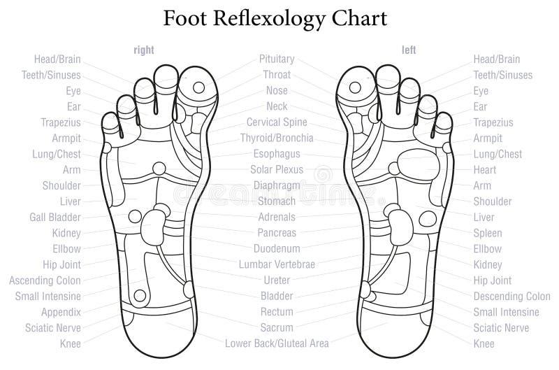 Esquema de la carta del Reflexology del pie ilustración del vector