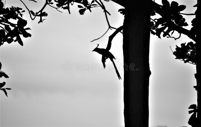Esquema de un pájaro en una rama fotografía de archivo