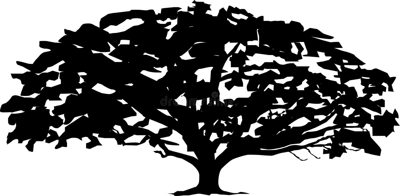 Esquema del blanco del negro del árbol del vector fotografía de archivo libre de regalías