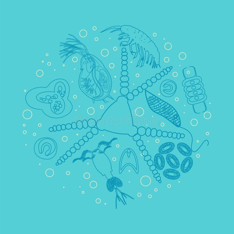 Esquema del zooplancton del fitoplacton del plancton ilustración del vector