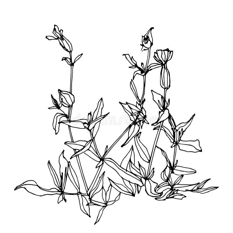 Esquema dibujado mano de la hierba salvaje Ejemplo del vector del estilo del bosquejo stock de ilustración