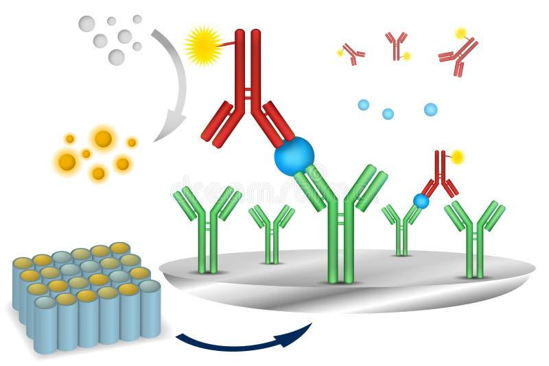 Esquema immuno da reação do ensaio de ELISA ilustração do vetor