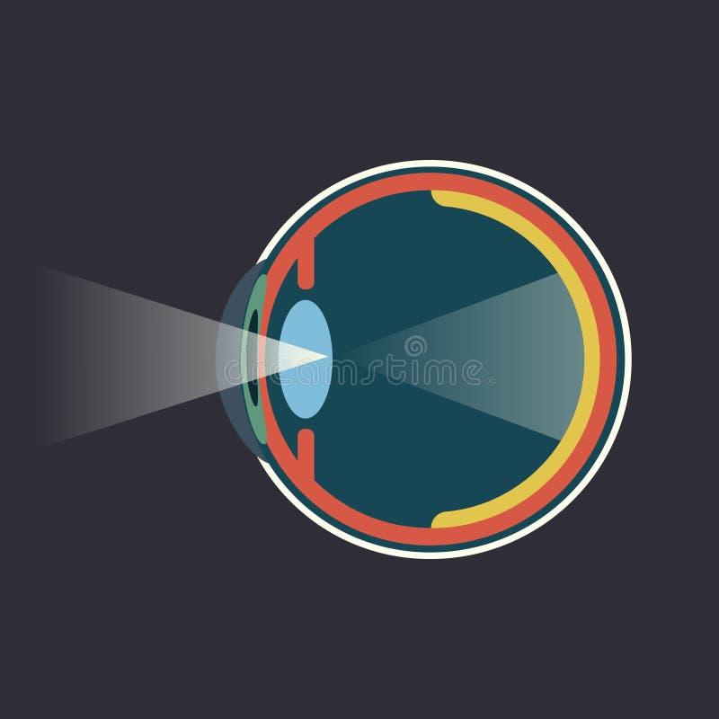 Esquema infograpgic de la disección del ojo humano ilustración del vector